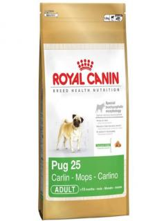 PUG CARLINO ADULTO 1,5Kg