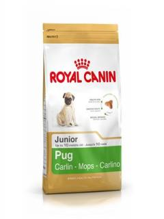 PUG CARLINO JUNIOR 1,5Kg